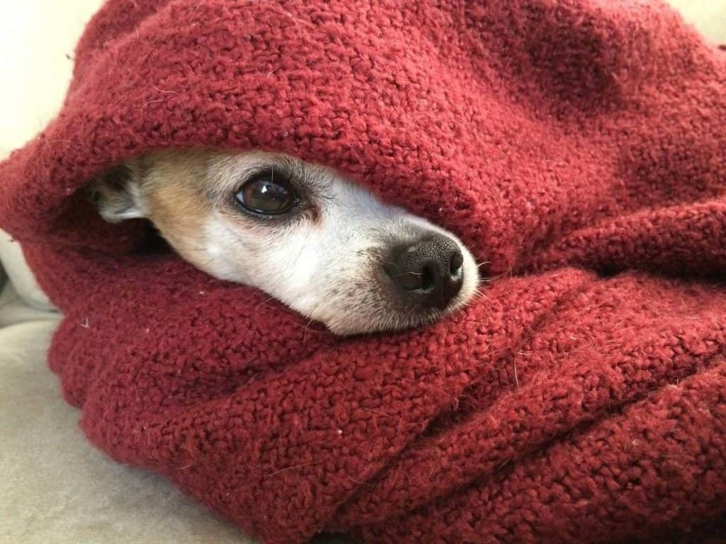 Be Renovative - pet blanket, helping to make house / apartment renovation simple, practical and fun